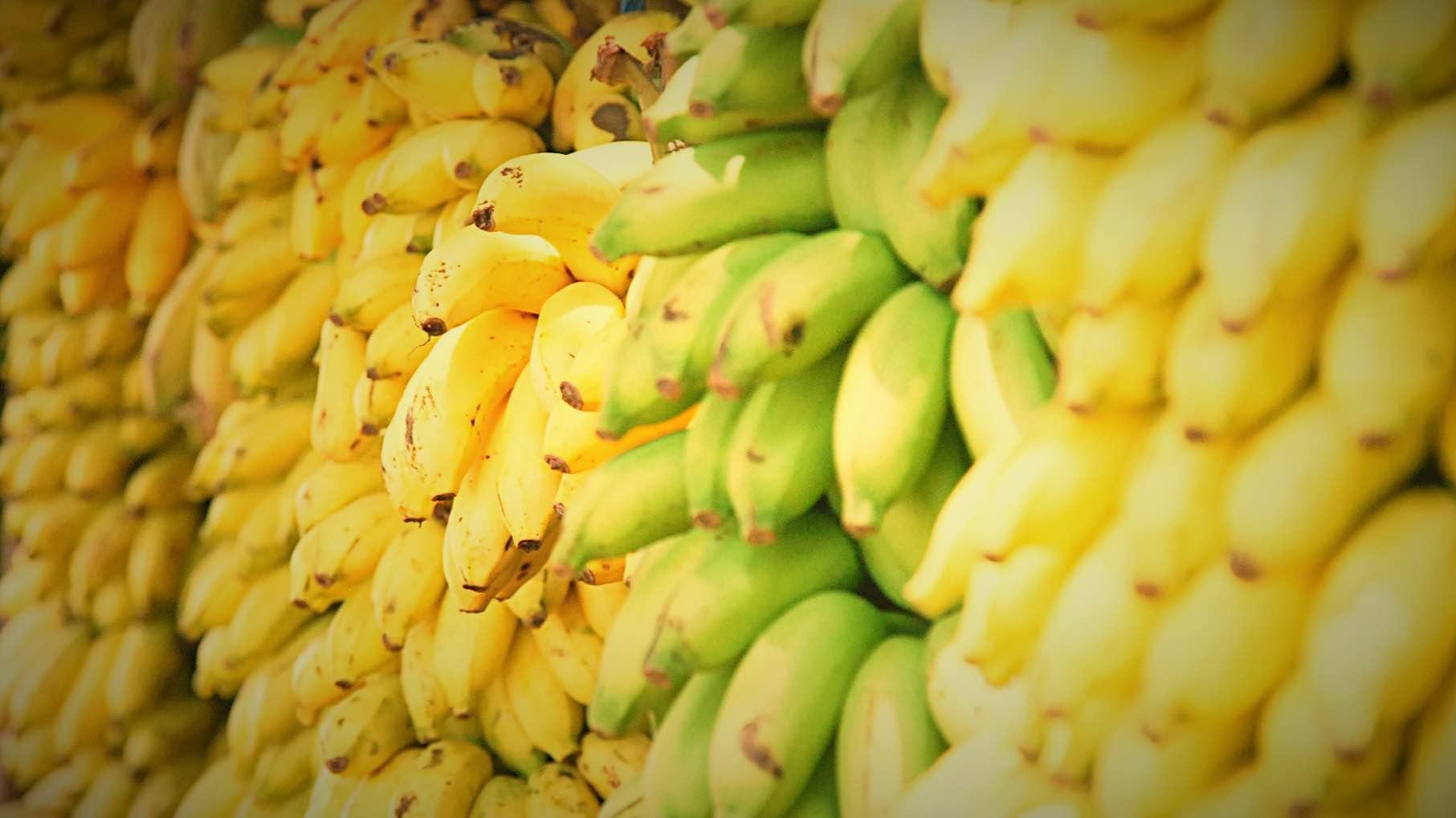 フィリピン・バナナ・画像_Fotor