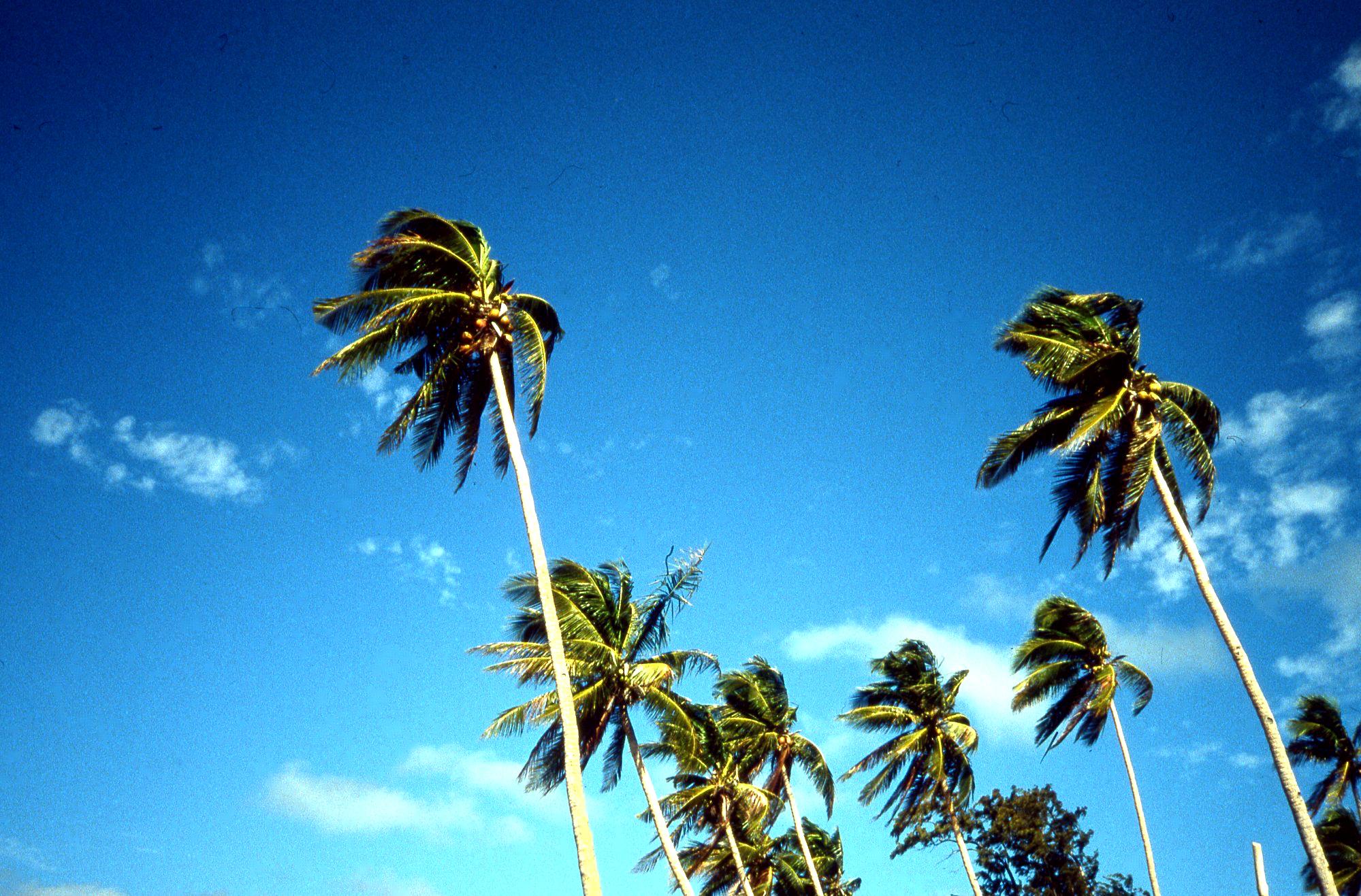 ボラカイ島・気候・ベストシーズン